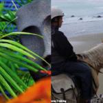 Tauranga : tourist in my own town