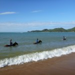 The daily horse dip on Magnetic Island